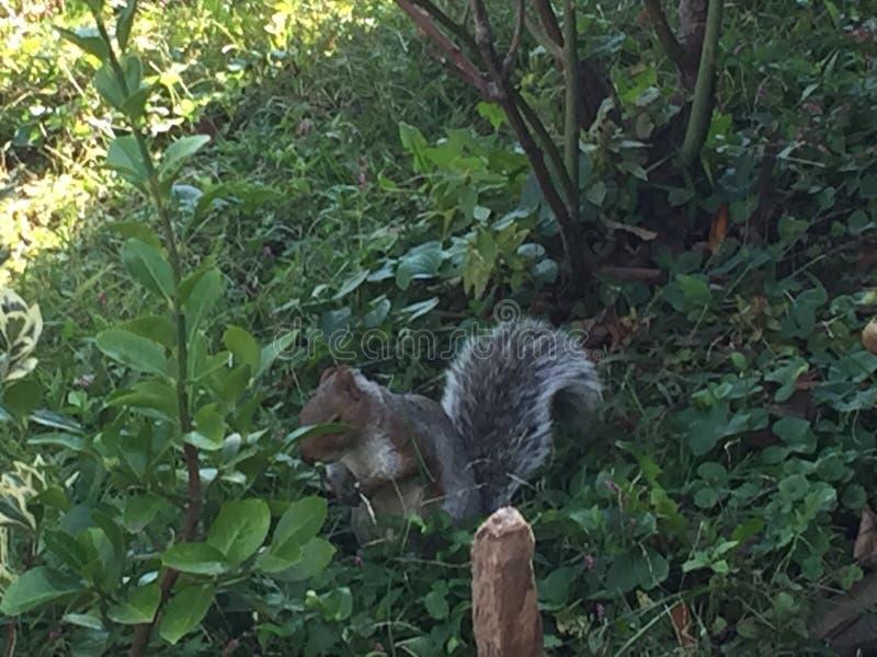 Vita di uno scoiattolo fotografie stock libere da diritti