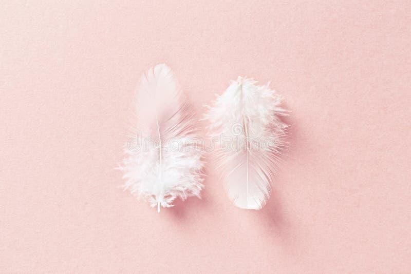 Vita fjädrar på bakgrund för pastellfärgade rosa färger royaltyfria foton