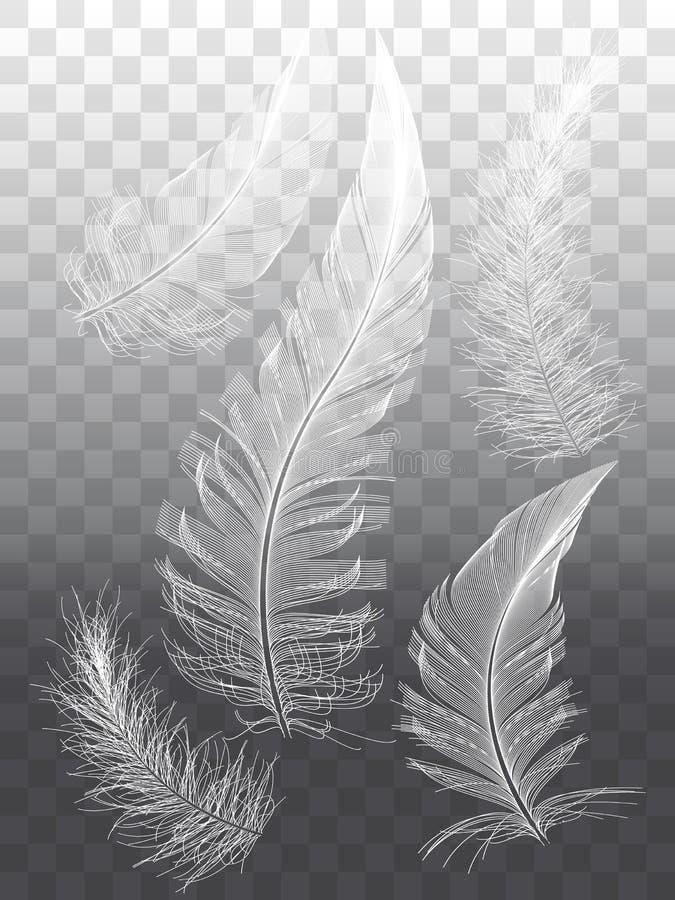 Vita fjädrar, uppsättning av beståndsdelar för grafisk design för vektor royaltyfri illustrationer