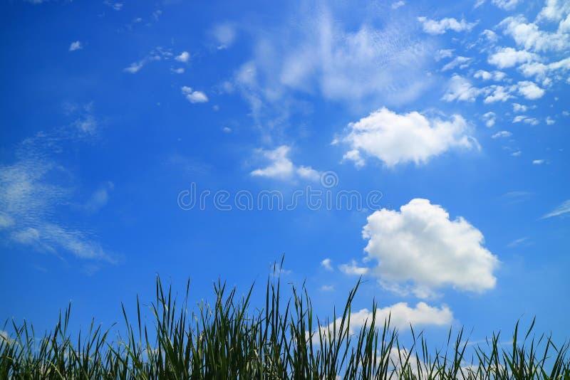 Vita fluffiga moln på livlig solig blå himmel över fält för grönt gräs royaltyfri bild
