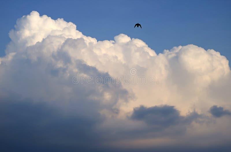 Vita fluffiga pösiga stackmolnmoln på den blåa himlen med en kontur av en flygfågel arkivbilder