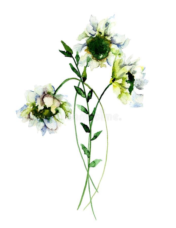 Vita Gerber blommor, royaltyfri illustrationer