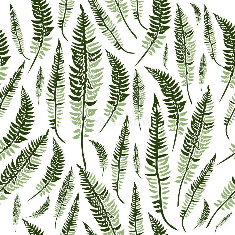 vita gröna isolerade leaves för fern vektor illustrationer
