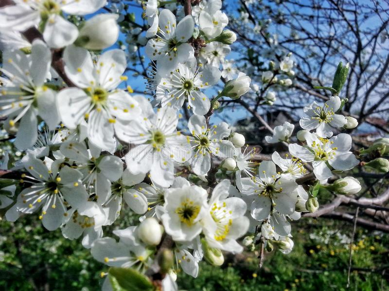 vita härliga blommor royaltyfri fotografi