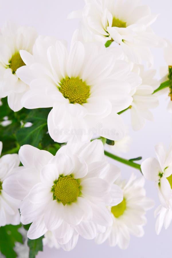 vita härliga blommor för bakgrund fotografering för bildbyråer