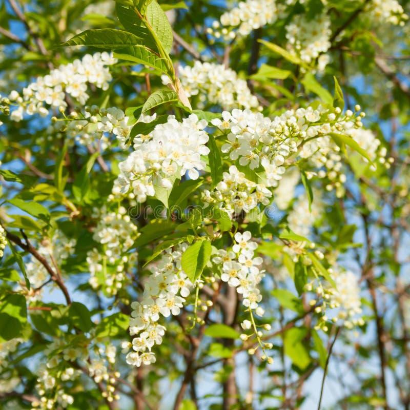 Vita härliga blommor på bakgrund för blå himmel arkivbild