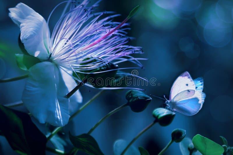 Vita härliga fjärilar mot en bakgrund av tropiska blommor Bild för makro för naturlig sommarvår konstnärlig royaltyfria bilder
