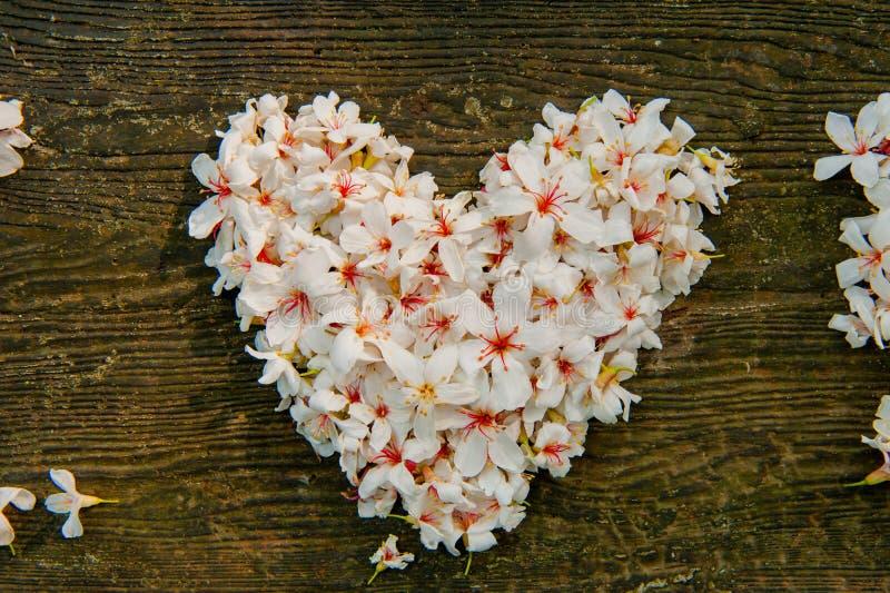 vita h?rliga blommor form f?r hj?rta f?r ? f?r ? f?r flower? f?r tr?d f?r ?tung royaltyfri fotografi
