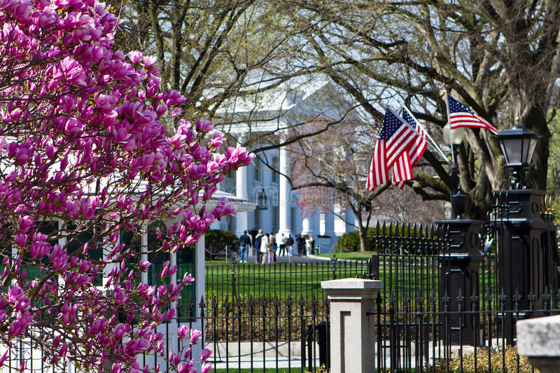 Vita hus i springtime arkivbilder