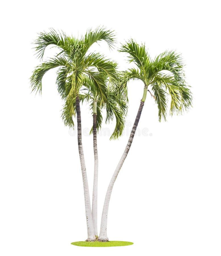 vita isolerade palmträd royaltyfria bilder