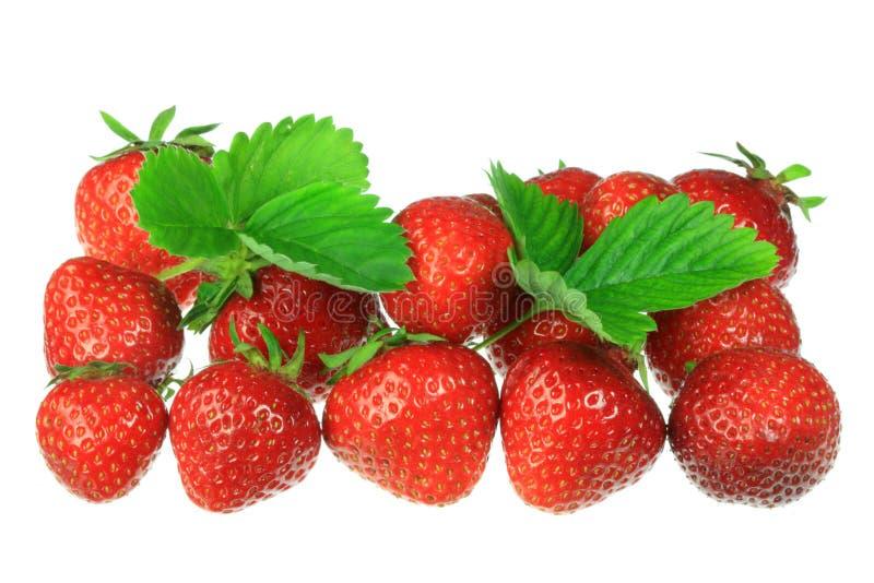 vita jordgubbar arkivbild