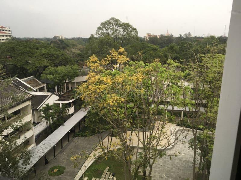 Vita kontorsbyggnader under tropiska gröna träd royaltyfri bild