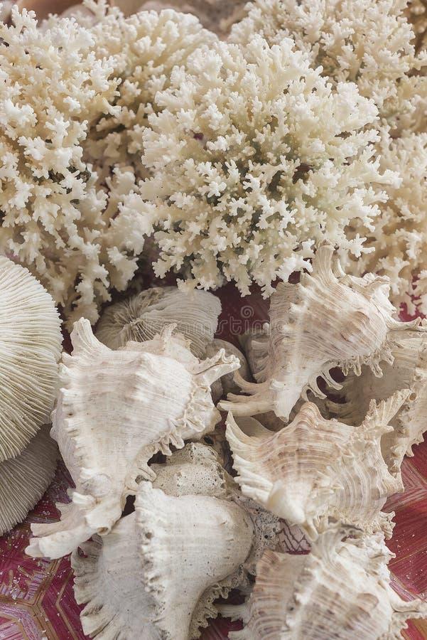 Vita korall- och snäckskalsouvenir i marknad royaltyfri fotografi