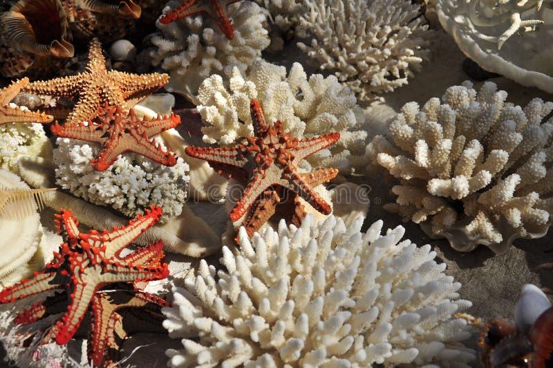 Vita korallhavsstjärnor och annat marin- liv arkivbilder