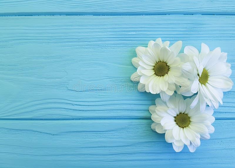 Vita krysantemum på blåa trälyckönskan kryddar design arkivbilder