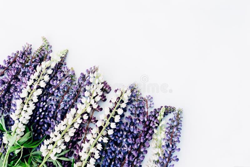 Vita lösa blommor och violett lupin royaltyfri foto