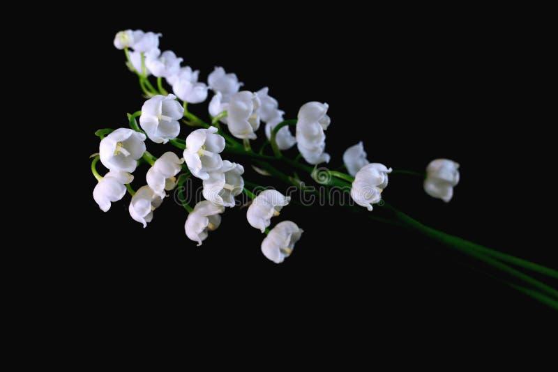 Vita liljekonvaljer på en svart bakgrundsnärbild fotografering för bildbyråer