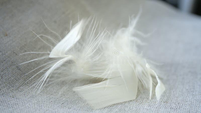 Vita ludd och fjädrar royaltyfria foton
