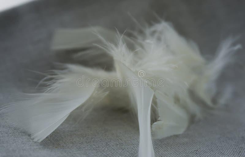 Vita ludd och fjädrar royaltyfri bild
