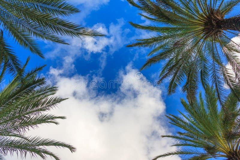 Vita moln, palmträd och blå himmel royaltyfri fotografi