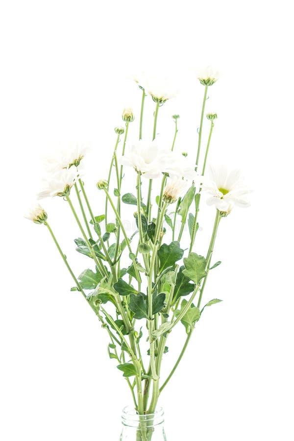 Download Vita mumblommor arkivfoto. Bild av makro, mums, blomma - 106832720
