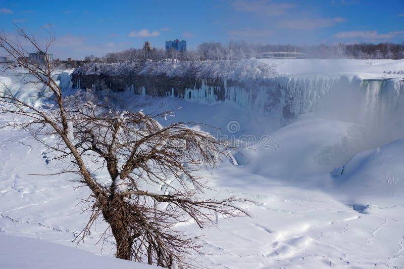Vita Niagara Falls och träd som frysas i vinter arkivfoton