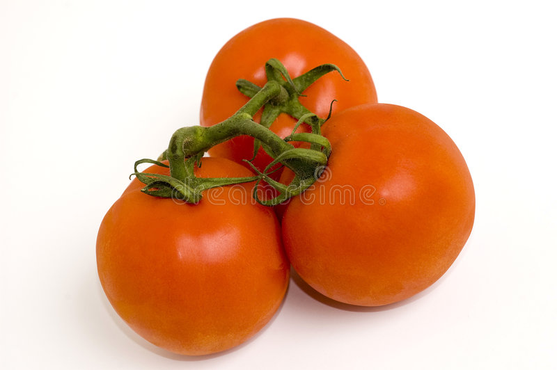 vita nya tomater fotografering för bildbyråer
