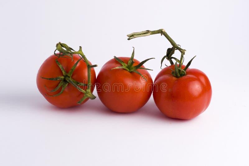 vita nya tomater för bakgrund Tre röda mogna tomater som isoleras på vit bakgrund vita bakgrundstomater fotografering för bildbyråer