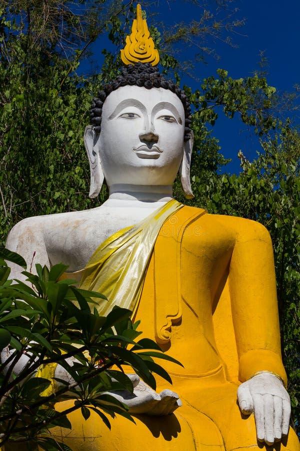Vita och gula buskar för Buddha royaltyfri foto