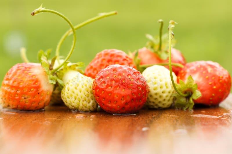 Vita och röda jordgubbar ligger i solen Läckert och sött efterrättbär vitaminer royaltyfri fotografi