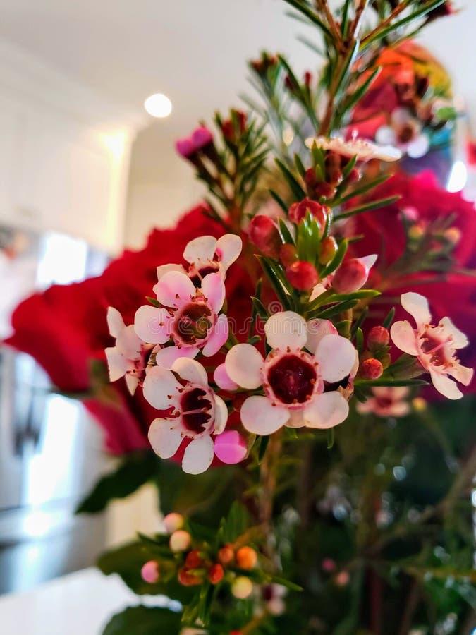 Vita och rosa blommor för gruppteträd royaltyfri foto