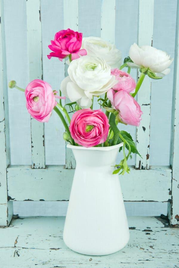 Vita och rosa ranunculusblommor royaltyfria foton