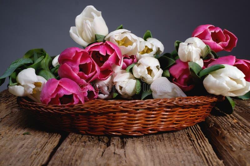 Vita och rosa tulpan i framdel för vide- korg på trätabellen arkivfoto
