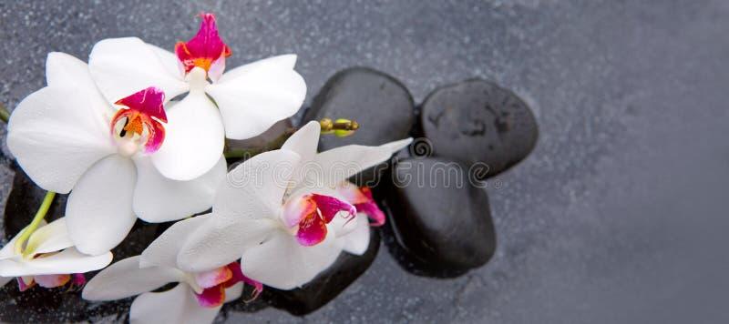 Vita orkidé- och svartbrunnsortstenar fotografering för bildbyråer