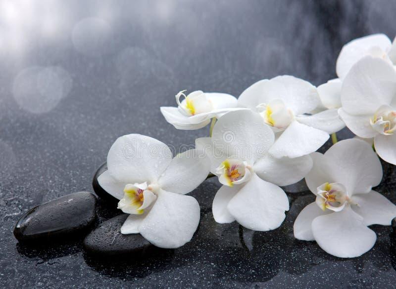 Vita orkidé- och svartstenar stänger sig upp fotografering för bildbyråer
