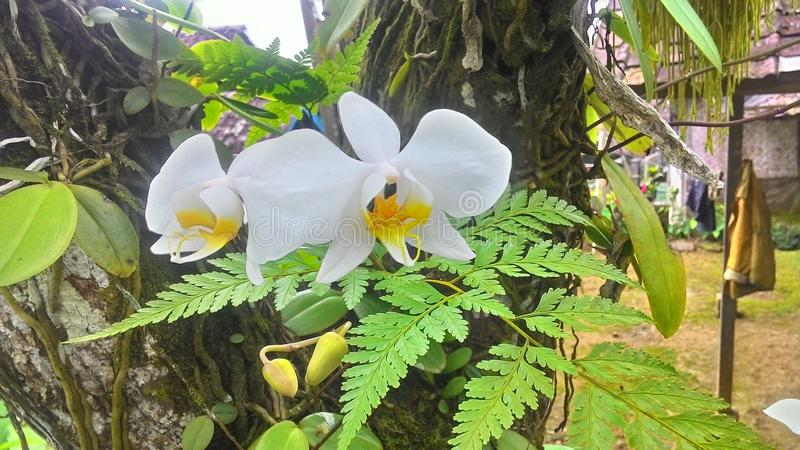 Vita orkidér blommar blommavårbakgrund i träd arkivbild