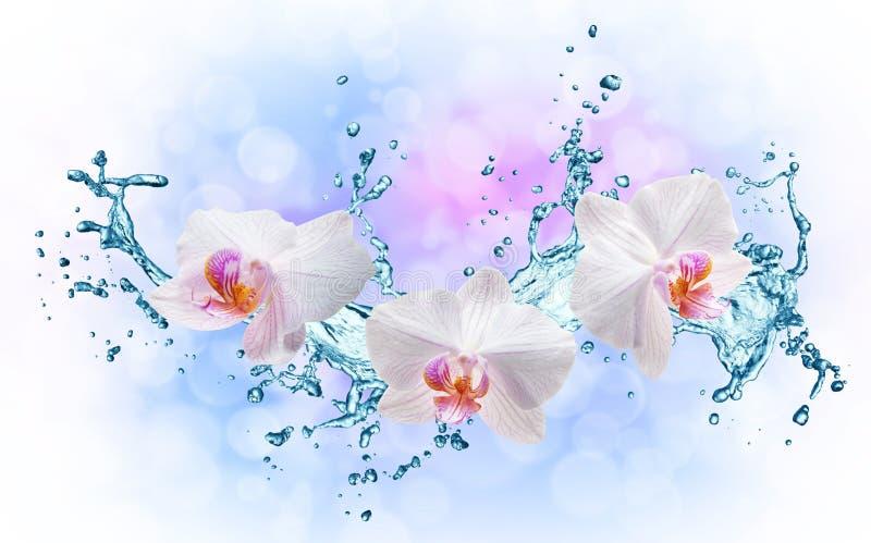 Vita orkidér på vattenfärgstänket stock illustrationer