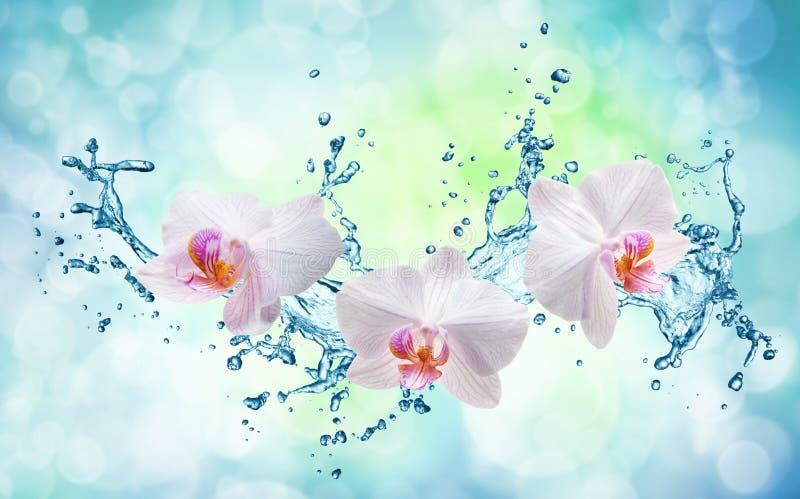 Vita orkidér på vattenfärgstänket vektor illustrationer