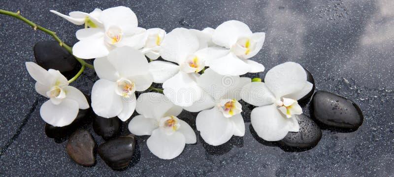 Vita orkid?- och svartstenar st?nger sig upp royaltyfri foto