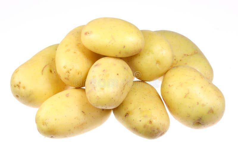 vita potatisar arkivfoton