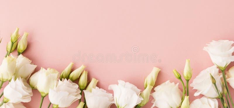 Vita rosor på rosa bakgrund royaltyfria bilder