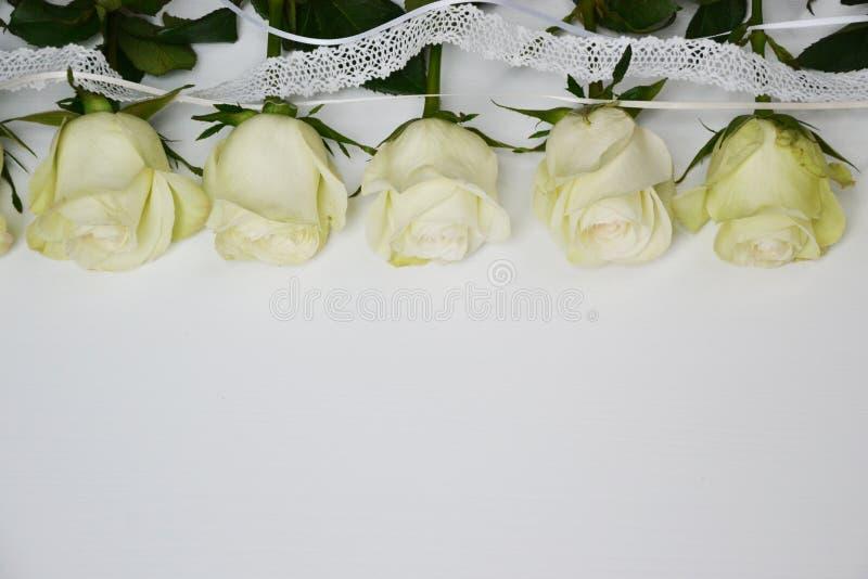 Vita rosor som lokaliseras i linje på vit bakgrund royaltyfri fotografi