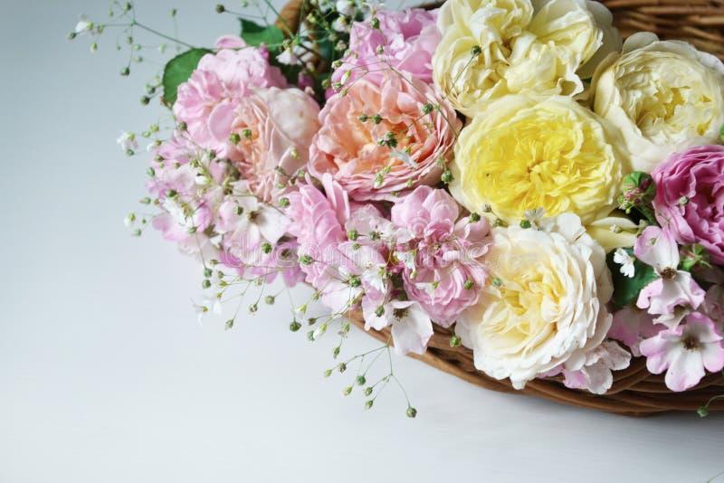 Vita rosor som lokaliseras i linje på vit bakgrund royaltyfria bilder