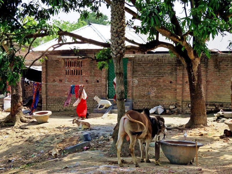 Vita rurale, Bangladesh immagine stock