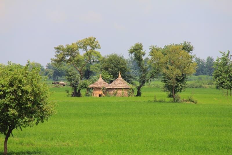 Vita rurale in India: campi di frumento e piccole capanne del fieno immagini stock libere da diritti