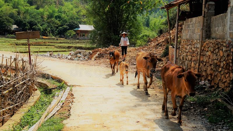 Vita rurale nel Vietnam immagine stock libera da diritti