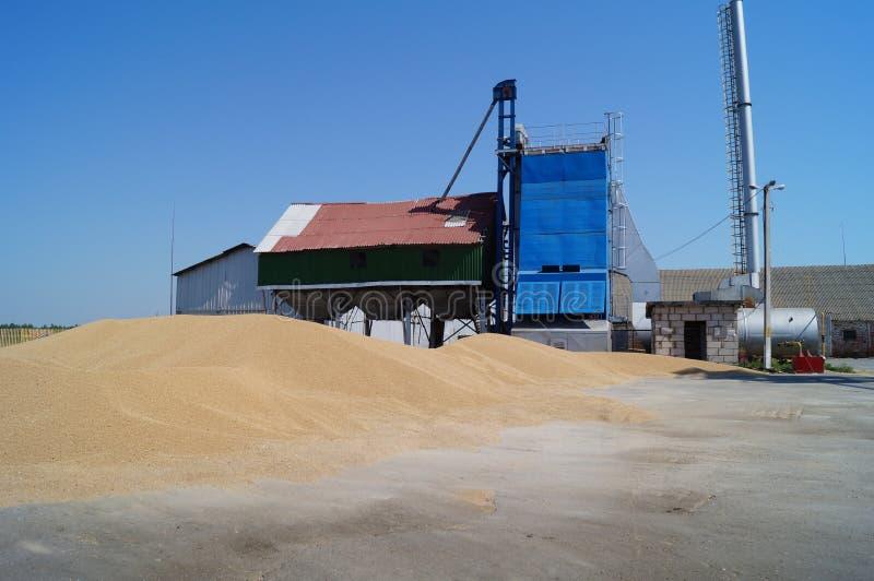 Vita rurale Stazione del foraggio e le montagne di grano immagine stock libera da diritti