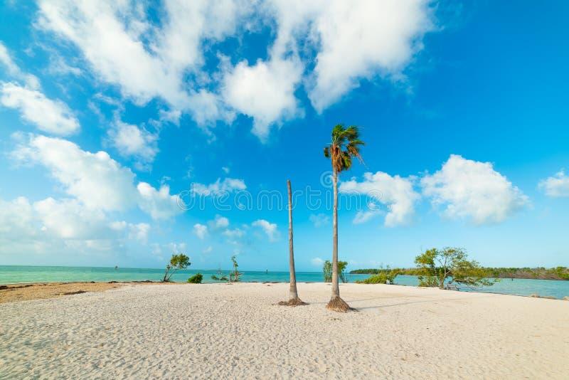 Vita sand och palmträd i sombrerostrand arkivbild