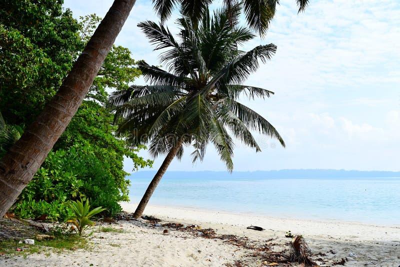 Vita Sandy Beach med blått havsvatten med kokospalmer och grönska - Vijaynagar, Havelock, Andaman Nicobar, Indien royaltyfria bilder