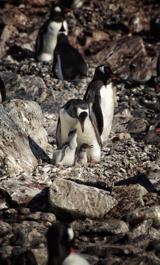 Vita selvaggia antartica immagine stock
